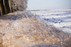Isväxter Arkivfoton