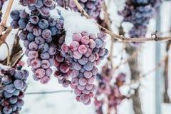 Isvin Röda druvor för vin för isvin i vintervillkor och snö arkivbilder
