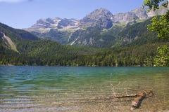 Itália, Alto Adige: Reflexão no lago Tovel Fotos de Stock Royalty Free
