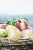 Itália, Toscânia, Magliano, fim acima de peras e de cerejas do pêssego na cesta Fotografia de Stock Royalty Free
