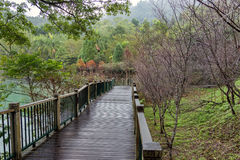 Ita Thao Lakeside Trail. A wooded trail beside Sun Moon Lake, Taiwan Royalty Free Stock Photos