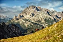 Italië, Dolomiet - de prachtige landschappen, paarden weiden dichtbij de onvruchtbare rotsen Royalty-vrije Stock Afbeelding