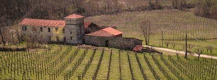 Italië. Ligurië. Italiaanse wijngaard met villa stock foto's