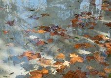 Italië. Rome. Gele esdoornbladeren. De prentbriefkaar van de herfst royalty-vrije stock afbeelding
