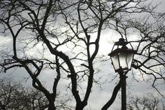 Italië. Rome. Zwarte naakte boom en de lamp stock fotografie