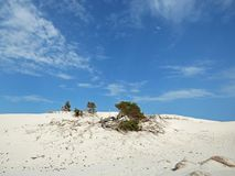 Italië, Sardinige, Carbonia Iglesias, Porto Pino, het duinenstrand Royalty-vrije Stock Foto