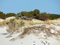 Italië, Sardinige, Carbonia Iglesias, Porto Pino, het duinenstrand Stock Foto's