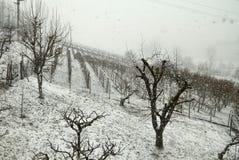 Italië, sneeuwval op de wijngaarden van Monferrato royalty-vrije stock foto