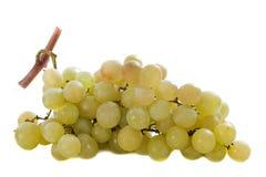 Italia grapes Stock Images