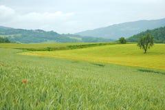 italia landscaep tuscany Fotografering för Bildbyråer