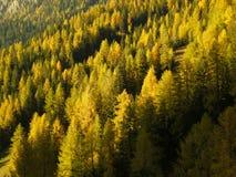 Italiaans bos Royalty-vrije Stock Afbeelding