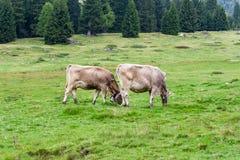 Italiaans landschap Stock Afbeeldingen