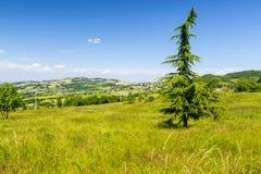 Italiaans Landschap: Sparrenuitzicht Stock Foto