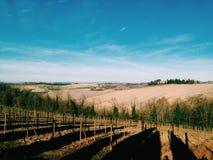 Italiaans landschap in Toscanië Stock Afbeeldingen
