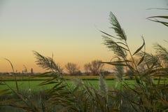 Italiaans platteland van vegetatie Royalty-vrije Stock Fotografie