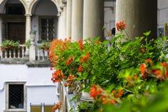 Italiaanse binnenplaats met bloemen Royalty-vrije Stock Foto's
