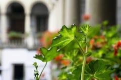 Italiaanse binnenplaats met bloemen Royalty-vrije Stock Afbeeldingen
