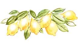 Italiaanse citroen Stock Afbeeldingen