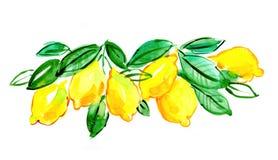 Italiaanse citroen Royalty-vrije Stock Foto's