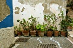 Italiaanse de straattuin van de potteninstallatie stock afbeeldingen