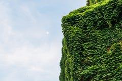 Italiaanse die villa in Milaan in mooie groene bladeren in de Lente, met exemplaarruimte tegen blauwe hemel wordt behandeld stock fotografie