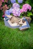 Italiaanse schoenen, elegante sandals in de tuin stock fotografie