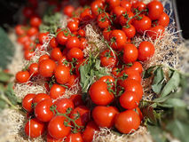 Italiaanse tomaten Stock Afbeeldingen