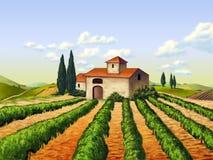 Italiaanse wijngaard Stock Afbeeldingen
