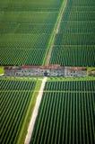Italiaanse Wijngaard - Mening Aereial Stock Afbeelding