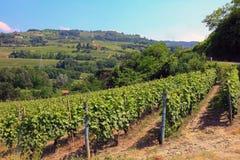 Italiaanse wijngaard in Piemonte Stock Fotografie