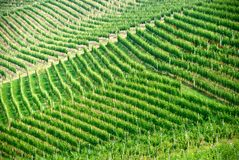 Italiaanse wijngaard in Piemonte Stock Foto's