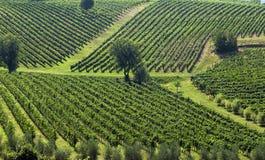 Italiaanse Wijngaarden Royalty-vrije Stock Afbeeldingen