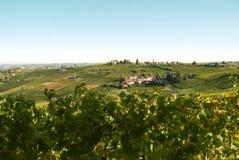 Italiaanse wijngaarden Royalty-vrije Stock Afbeelding