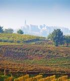 Italiaanse wijngaarden (op de achtergrond Calosso, Asti, Piemonte) Stock Foto
