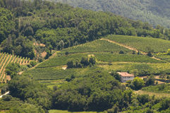 Italiaanse wijngaarden op heuvels Stock Afbeeldingen