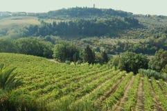 Italiaanse wijngaarden in Toscanië Stock Fotografie