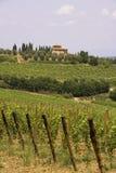 Italiaanse wijnstokken stock afbeeldingen