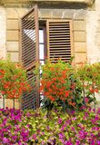 Italiaanse windowbox Royalty-vrije Stock Foto