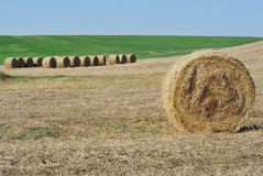 Italian agricolture. Landscape during summer Stock Photography