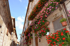 Italian alley in summer. Blooming red and pink Geranium flowers on balconies and windows of old houses in a typical alley of the ancient town Frontone, Marche Royalty Free Stock Photo