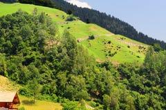 Italian Alps Royalty Free Stock Images