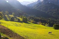 Italian Alps and horses Stock Photos