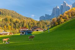Italian Alps with horses. With sun Stock Photo