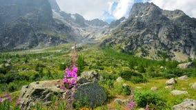 Italian Alps Scenic Mountains Range stock footage