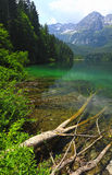 Italian alps tovel lake Royalty Free Stock Image
