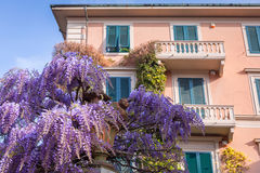 Italian architecture of Pisa city. With purple lilac bushes Stock Photography