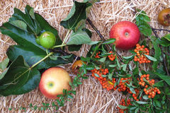 Italian autumn fruits Royalty Free Stock Images