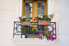 Italian balcony with pot flowers Stock Images
