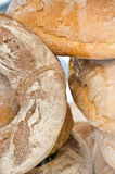 Italian bread loaf Royalty Free Stock Photography