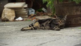 Italian Cat Resting in an Alley. Scenes from around Montepulciano, Italy stock footage